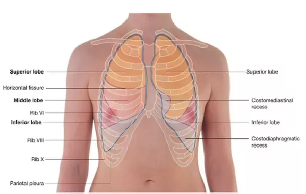 Here's what you need to know about pneumonia, its causes and treatment procedures