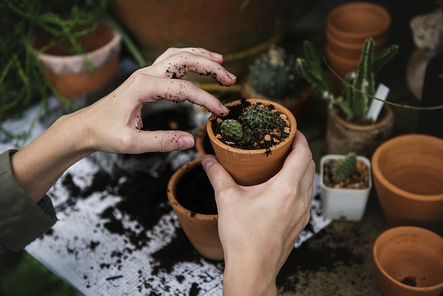 THE BASIC SKILLS YOU NEED TO BE A GARDENER