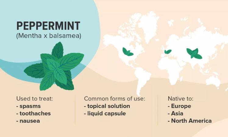Peppermint (Mentha x balsamea)