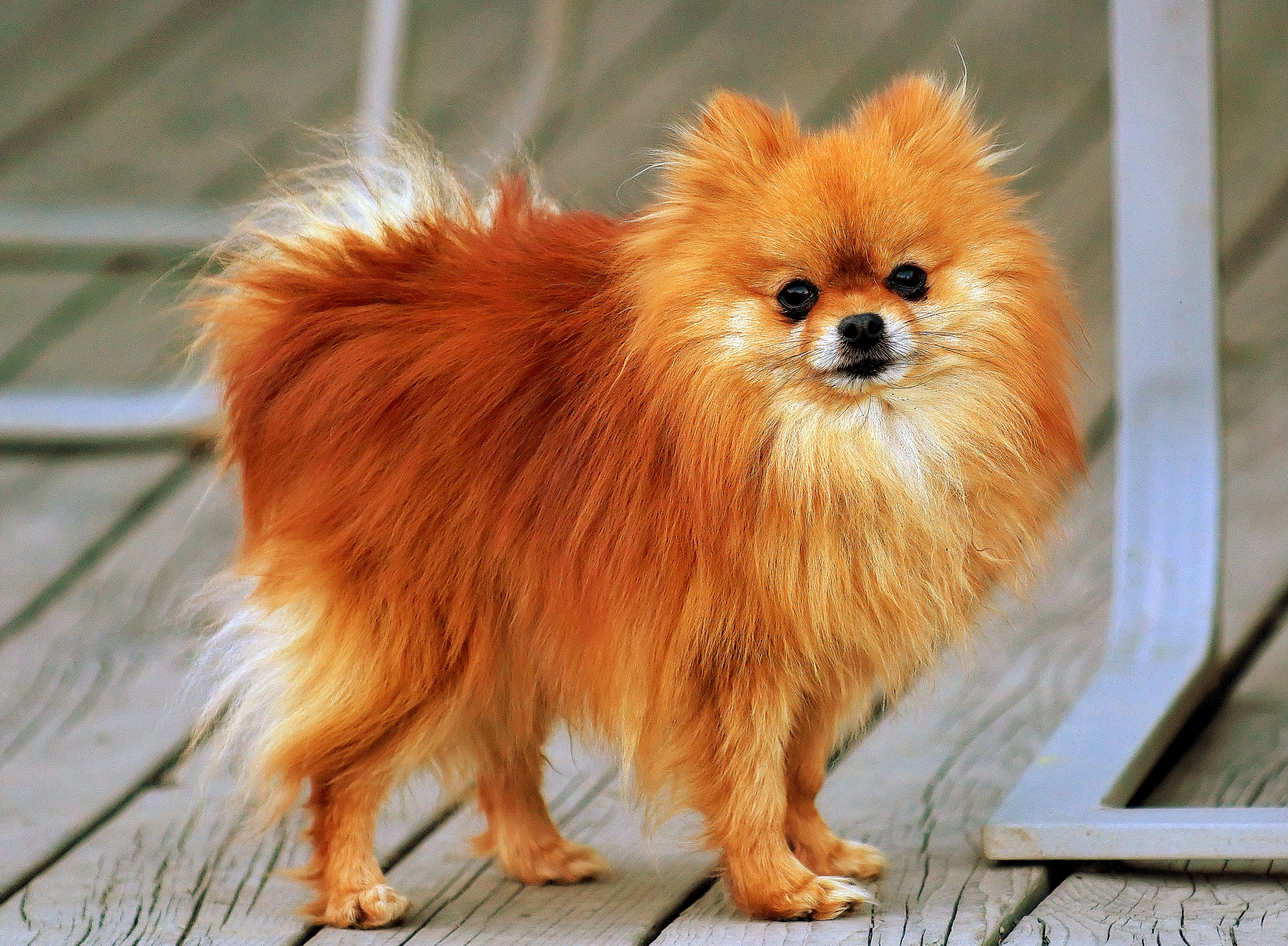 Most Popular Small Dog Breeds to Bring Home as Pets