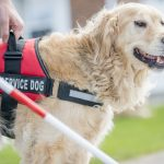 Dos and Don'ts When Choosing a Reliable Service Dog Training Program
