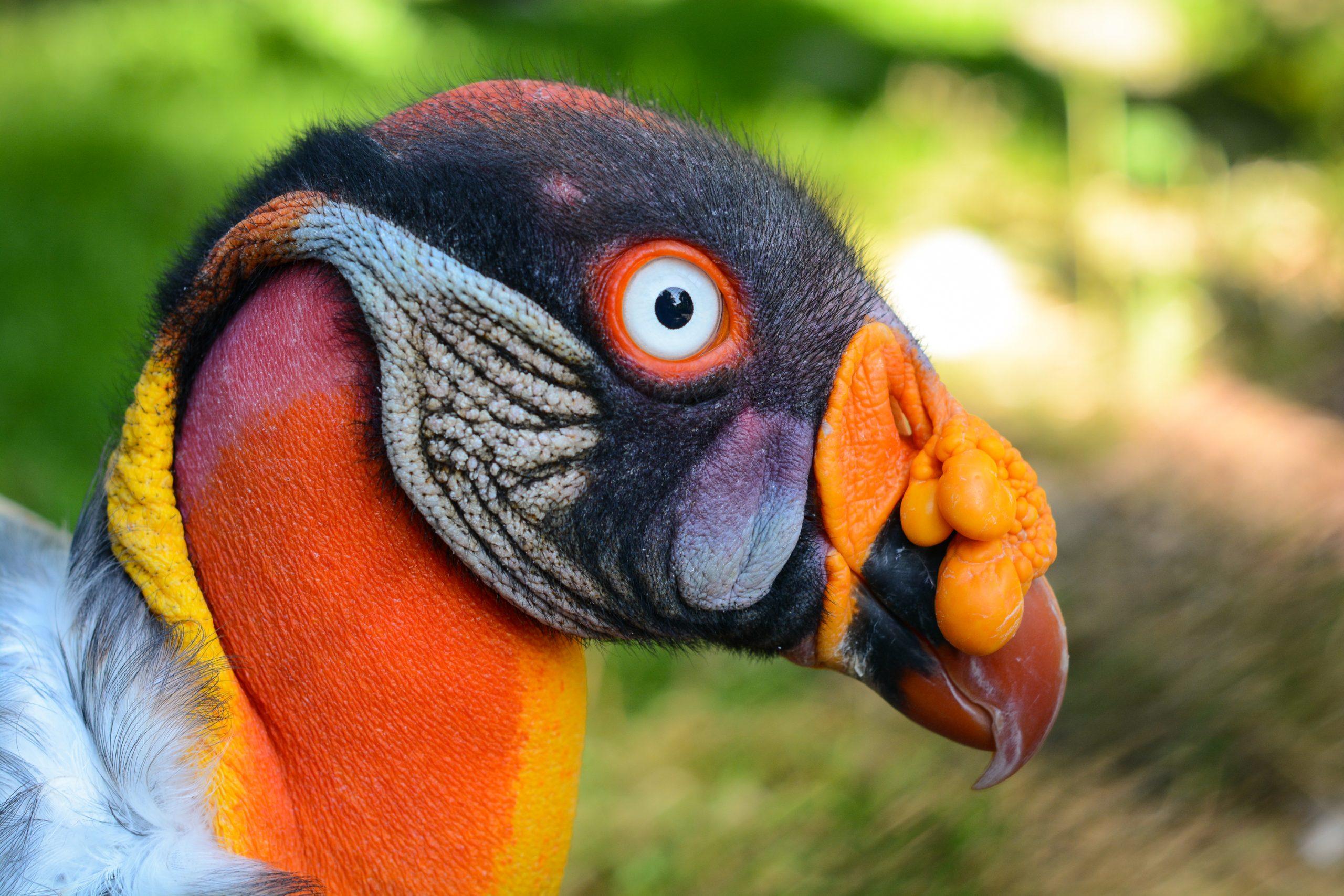 Amazon Rainforest Animals – a List of Unique Creatures