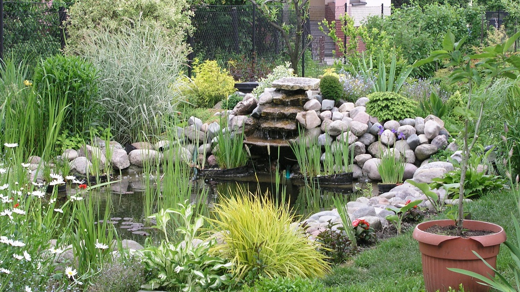 How Much Money Does it Take to Set a Backyard Pond?