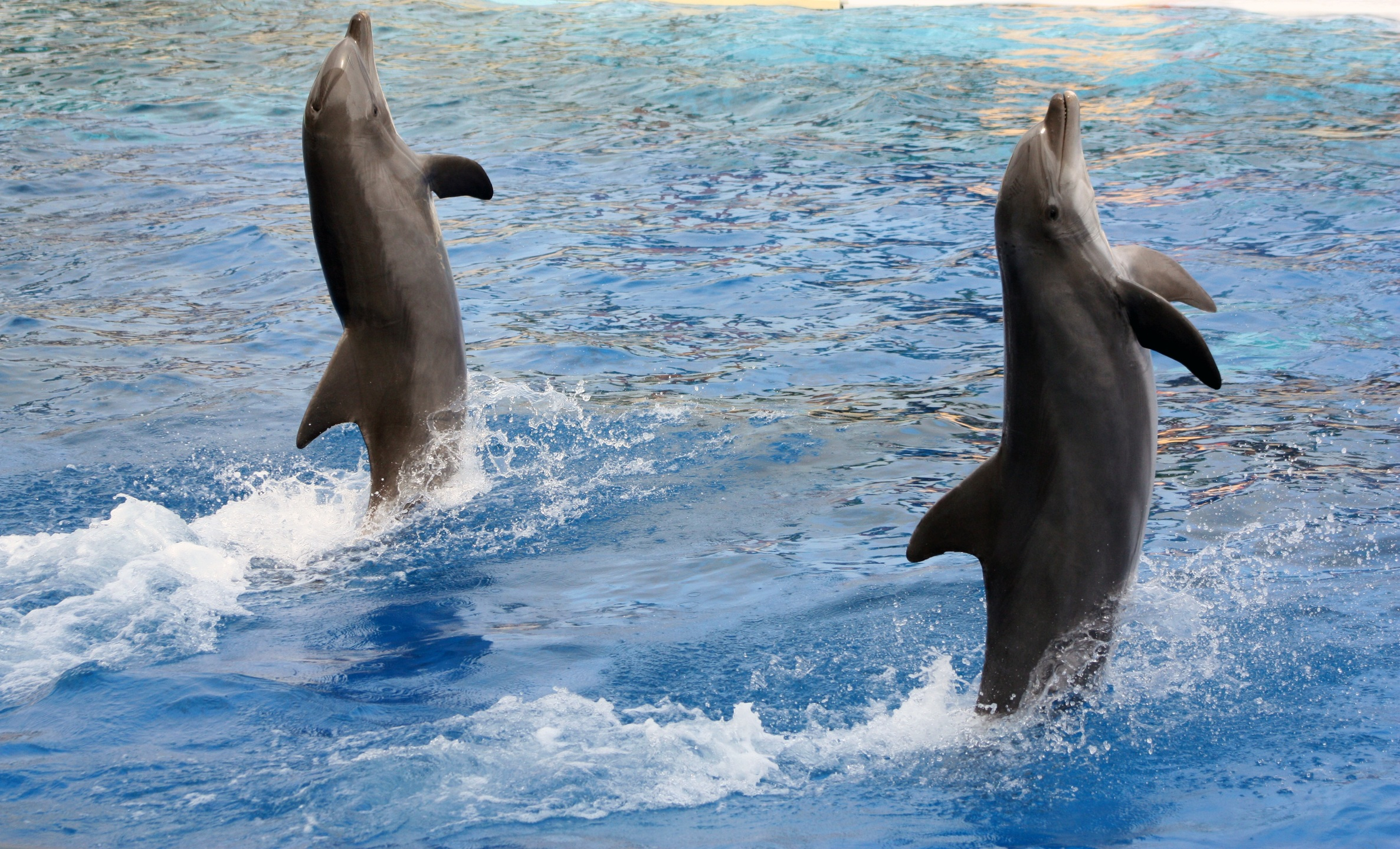 Amazing Dolphin Facts That Will Make You Fall in Love With Them