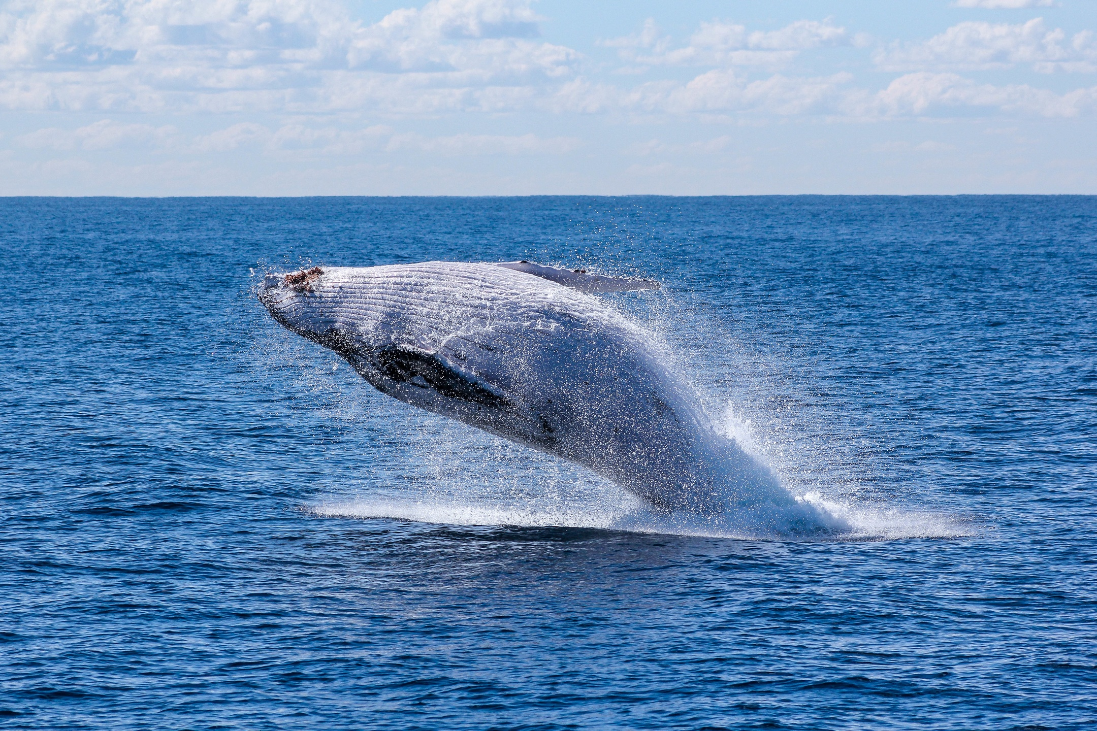 Blue Whale Facts – Reasons Why We Should Know Them at Large