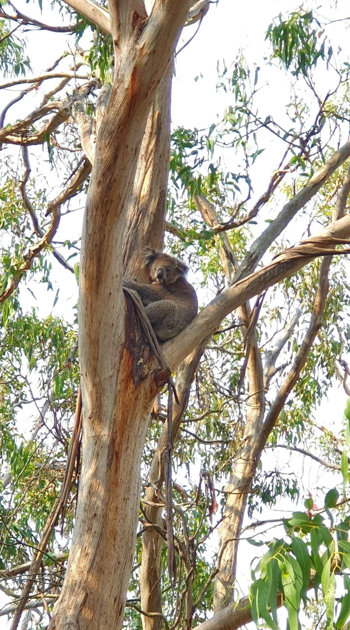 Kangaroo Point & Lookout