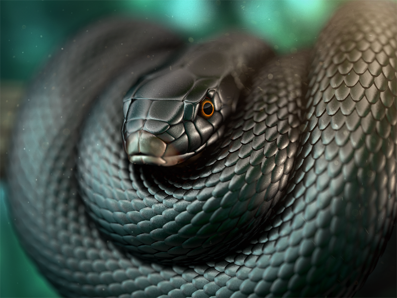 27 Most Venomous Snakes in The World