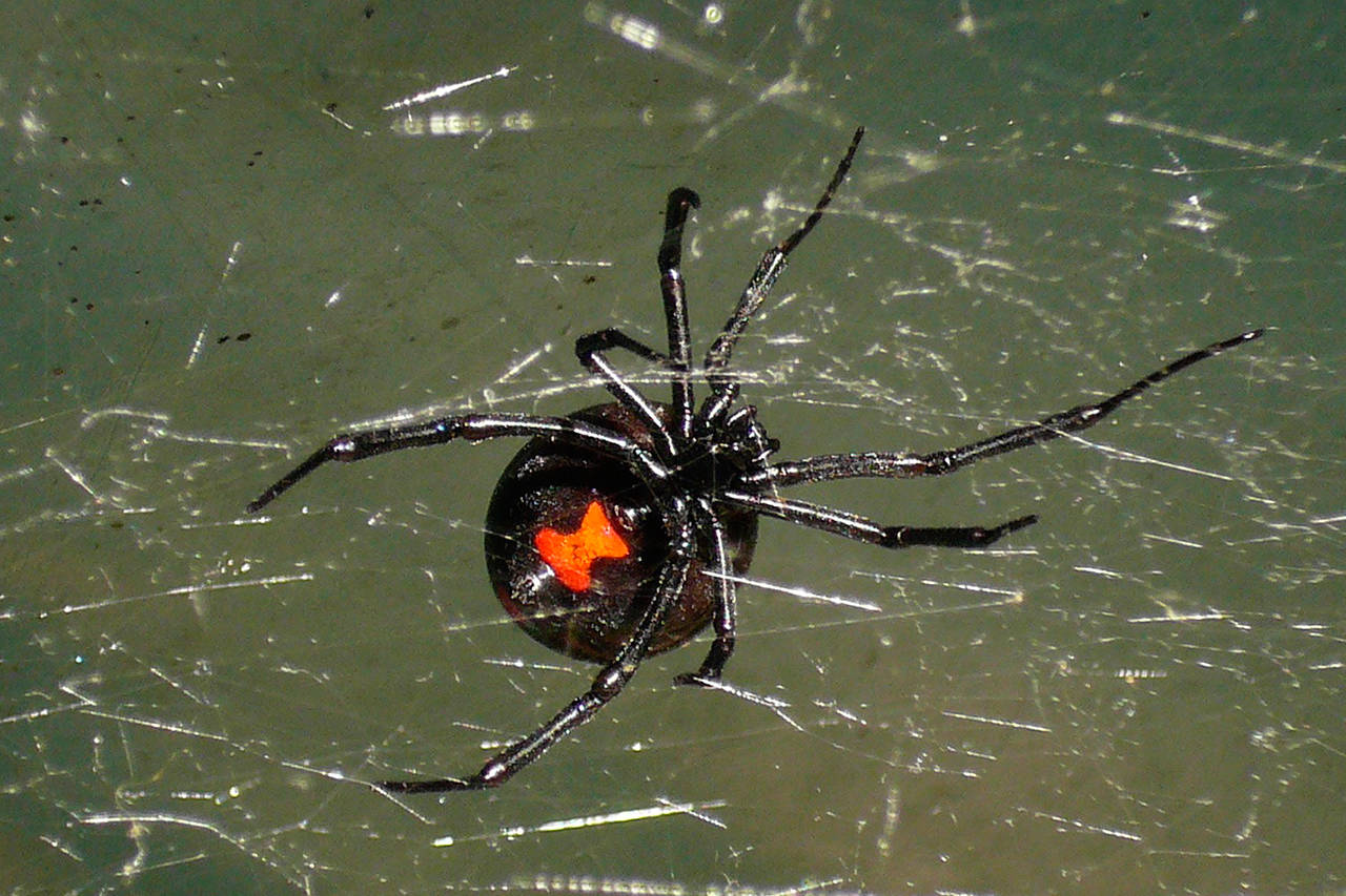 14 Deadliest Spiders in the World You Didn't Know About