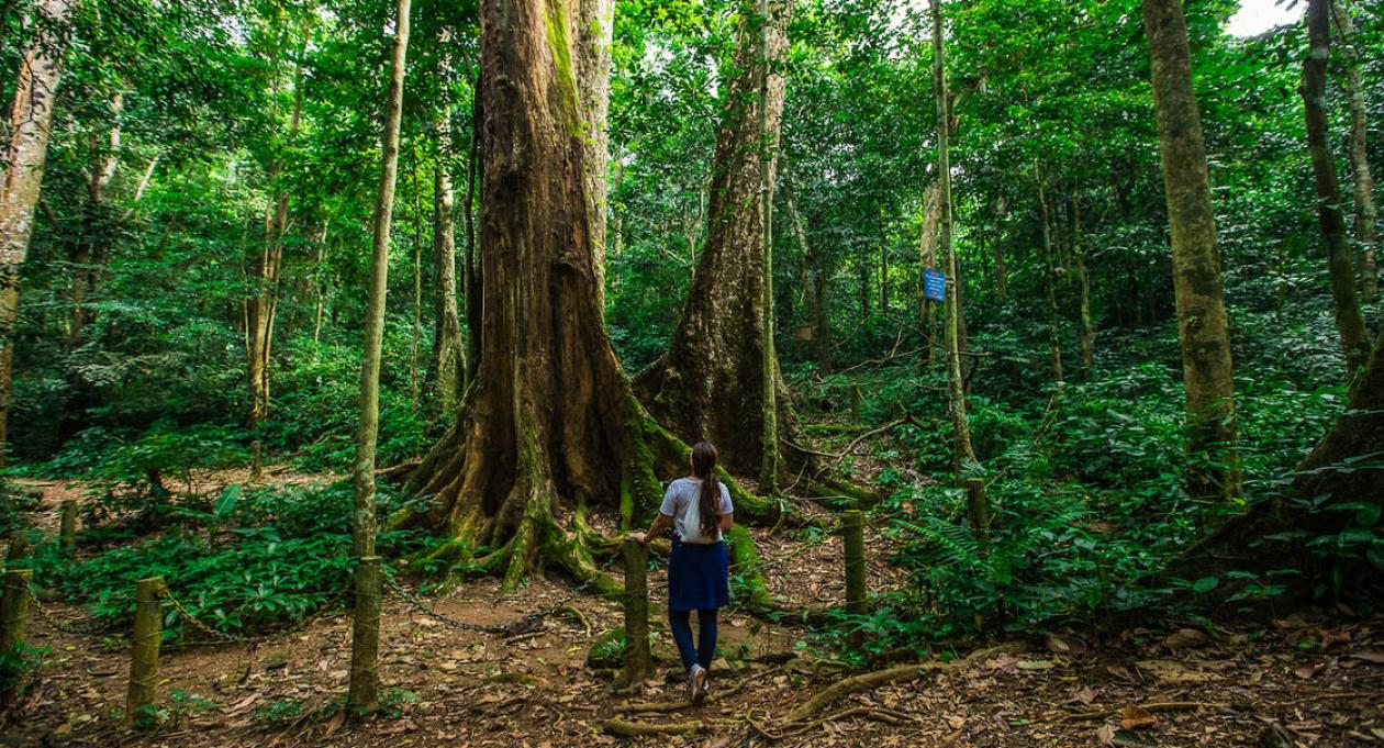 Top Seven Wildlife Experiences in Vietnam