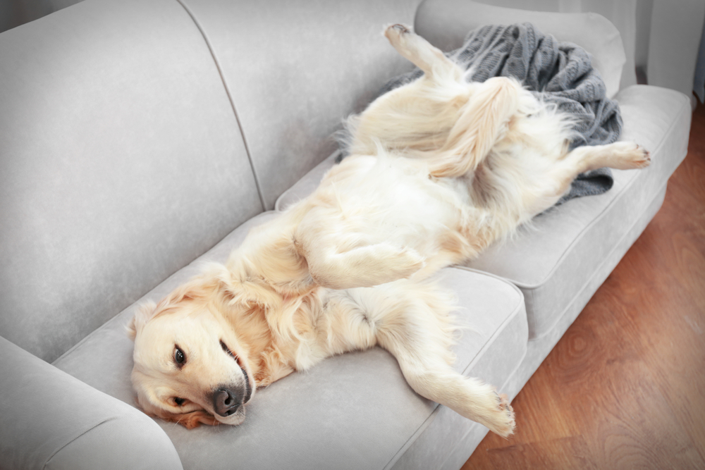A comprehensive furniture Buying Guide for Pet Parents