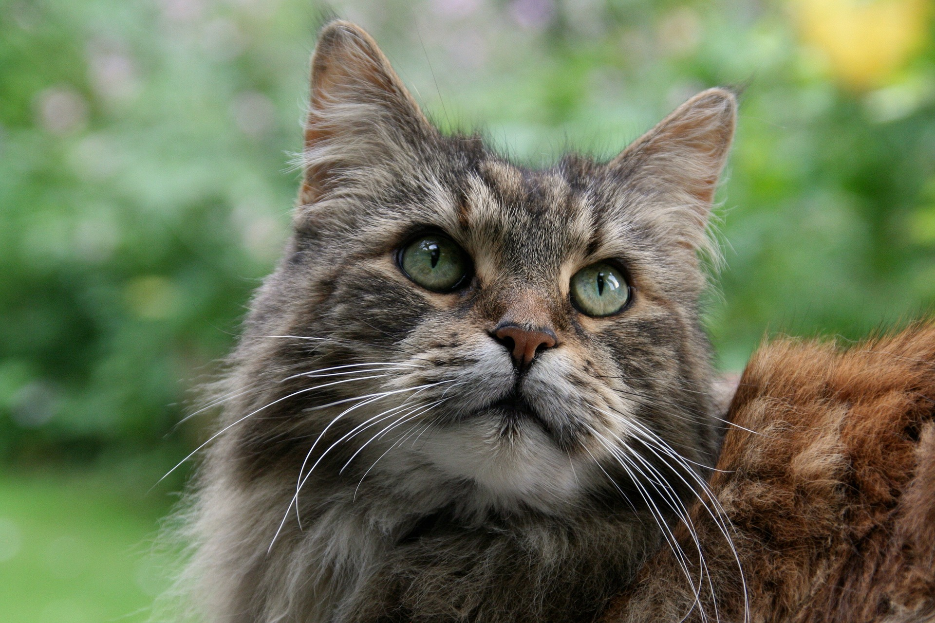 Breeds of Cats That Are the Most Cheerful and Friendliest in Nature