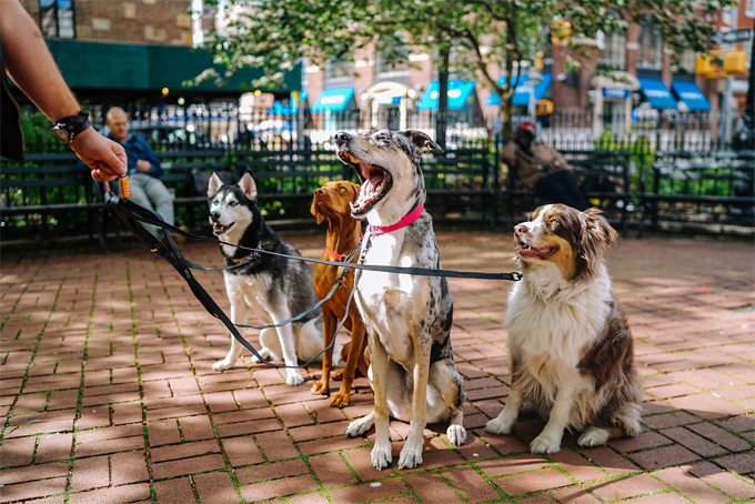 Top 6 Dog Behavior Problems and How to Correct them