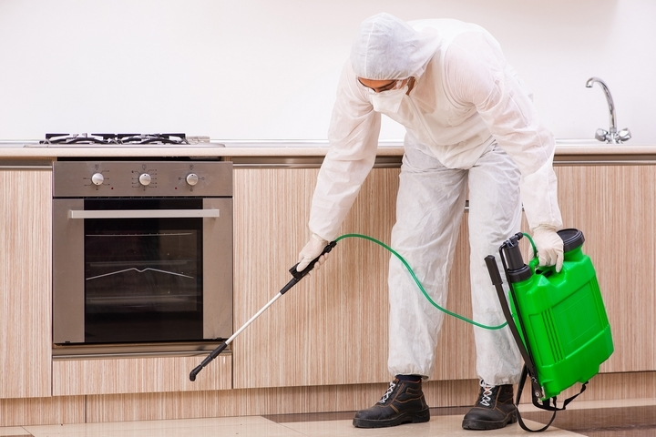 Top 4 Reasons You Need Pest Control