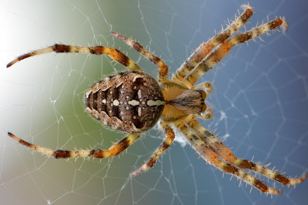 Getting Rid of Your Fears: Spider Facts That May Cure Your Arachnophobia