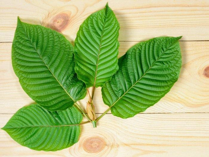 The Best 5 Kratom Strains To Try In 2021